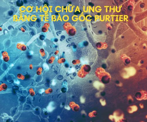 Cơ hội cứu bệnh nhân ung thư bằng liệu trình tế bào gốc purtier?